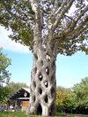 Baskettree
