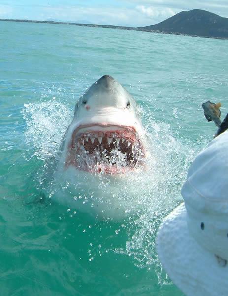 30_shark
